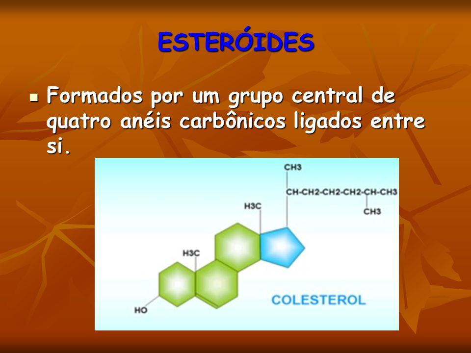 ESTERÓIDES Formados por um grupo central de quatro anéis carbônicos ligados entre si.