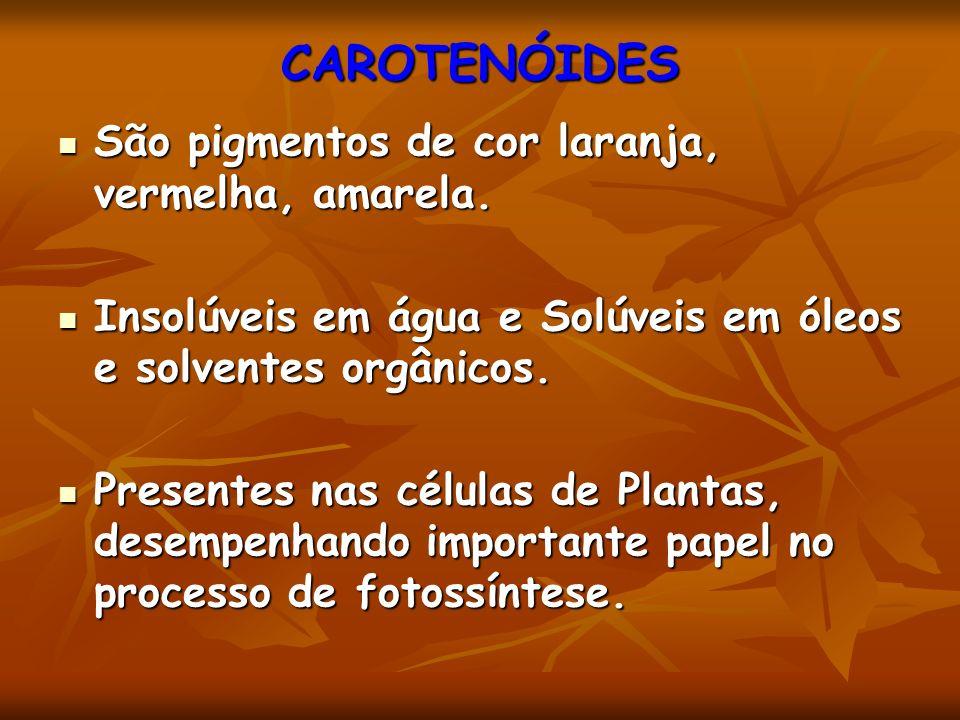 CAROTENÓIDES São pigmentos de cor laranja, vermelha, amarela.