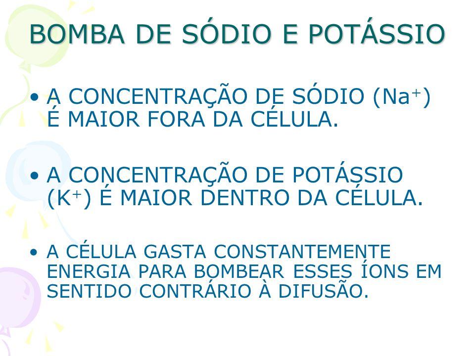 BOMBA DE SÓDIO E POTÁSSIO