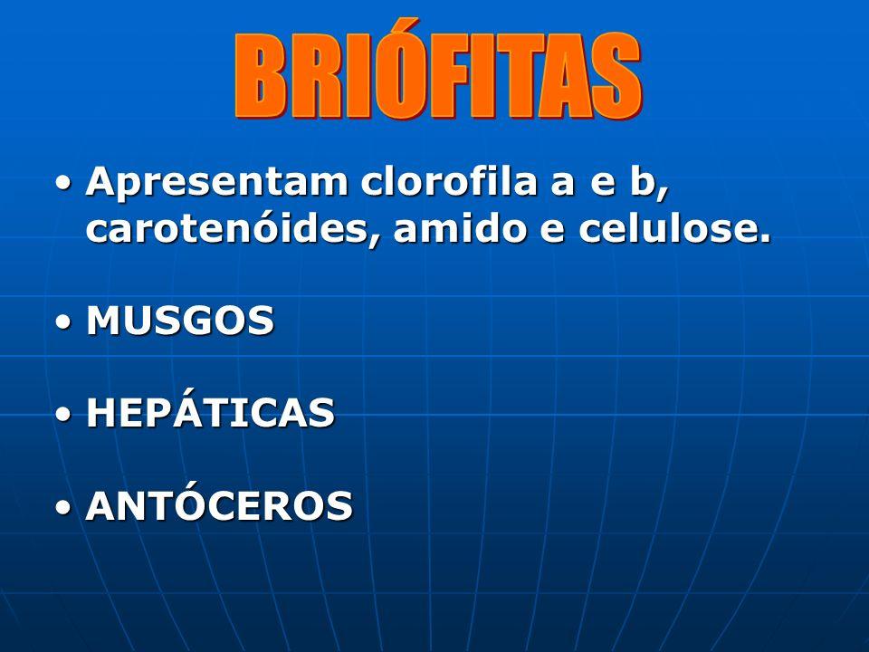 BRIÓFITAS Apresentam clorofila a e b, carotenóides, amido e celulose.