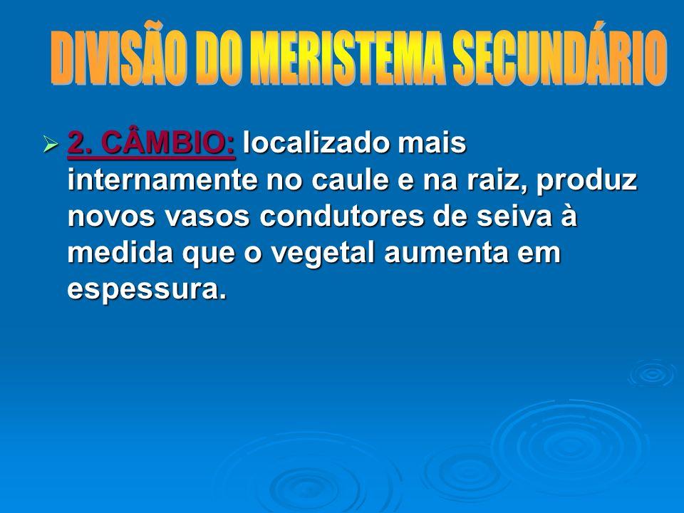 DIVISÃO DO MERISTEMA SECUNDÁRIO