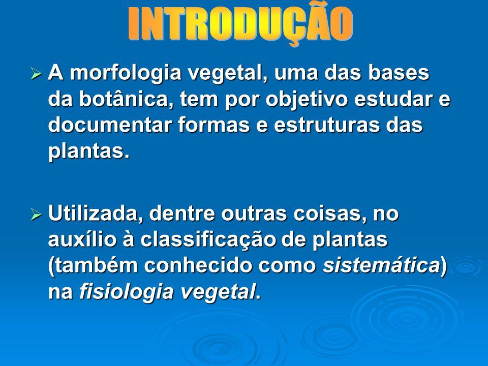 INTRODUÇÃO A morfologia vegetal, uma das bases da botânica, tem por objetivo estudar e documentar formas e estruturas das plantas.