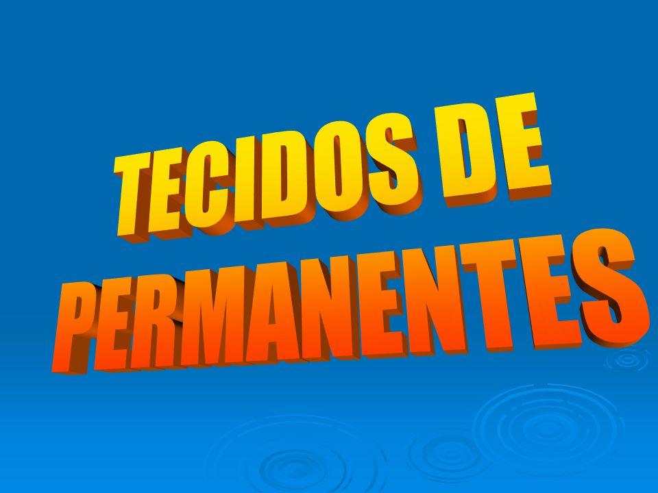 TECIDOS DE PERMANENTES