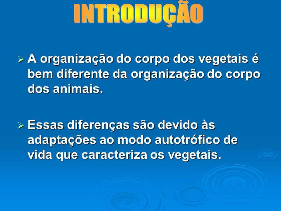 INTRODUÇÃO A organização do corpo dos vegetais é bem diferente da organização do corpo dos animais.