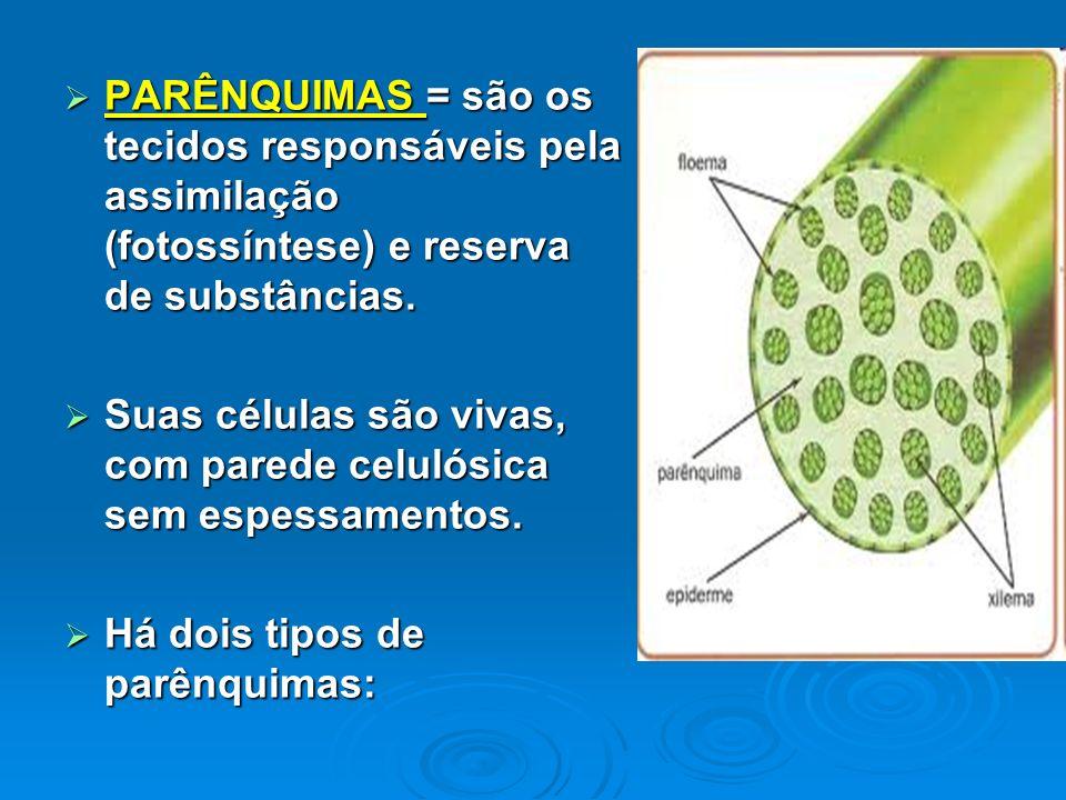 PARÊNQUIMAS = são os tecidos responsáveis pela assimilação (fotossíntese) e reserva de substâncias.