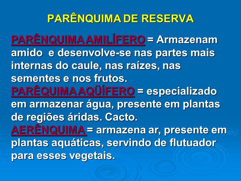 PARÊNQUIMA DE RESERVA
