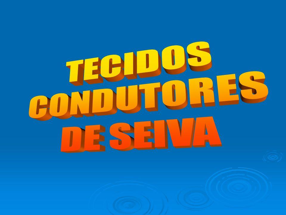 TECIDOS CONDUTORES DE SEIVA