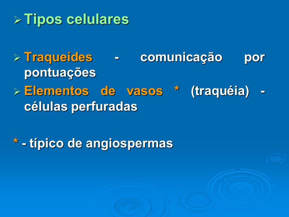 Tipos celulares Traqueídes - comunicação por pontuações