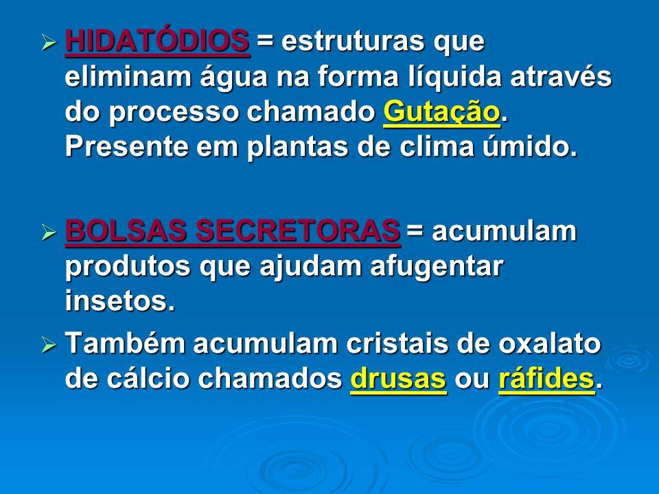 HIDATÓDIOS = estruturas que eliminam água na forma líquida através do processo chamado Gutação. Presente em plantas de clima úmido.