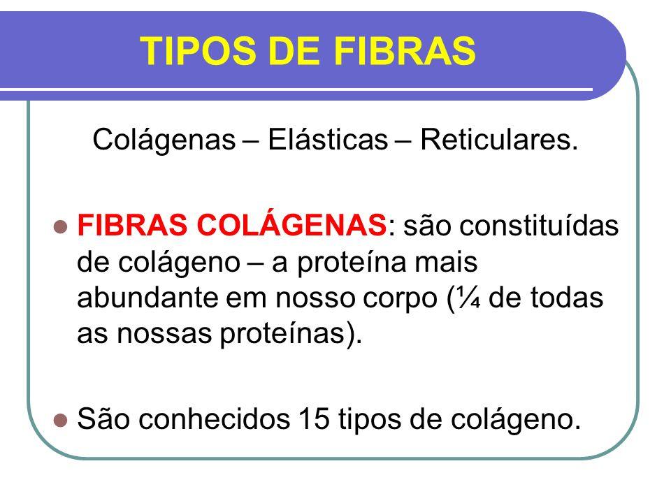 Colágenas – Elásticas – Reticulares.