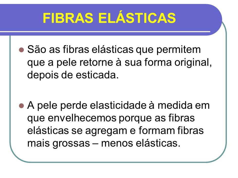 FIBRAS ELÁSTICASSão as fibras elásticas que permitem que a pele retorne à sua forma original, depois de esticada.