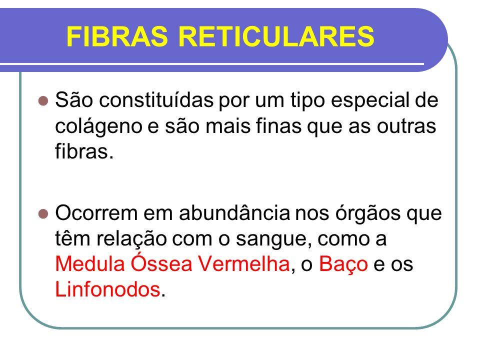 FIBRAS RETICULARESSão constituídas por um tipo especial de colágeno e são mais finas que as outras fibras.