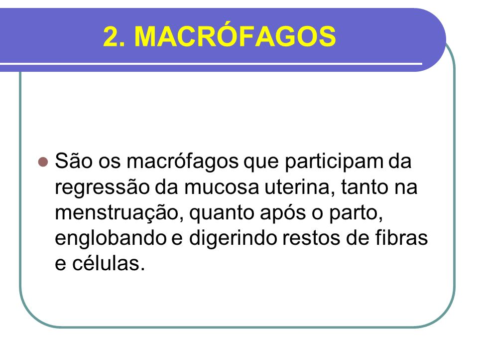2. MACRÓFAGOS