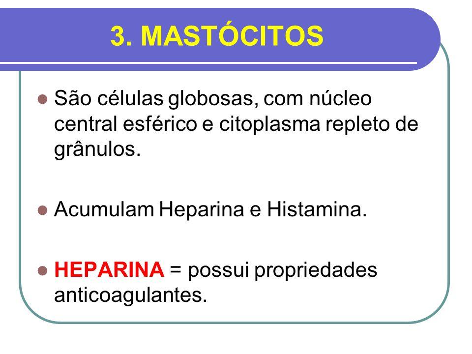 3. MASTÓCITOSSão células globosas, com núcleo central esférico e citoplasma repleto de grânulos. Acumulam Heparina e Histamina.