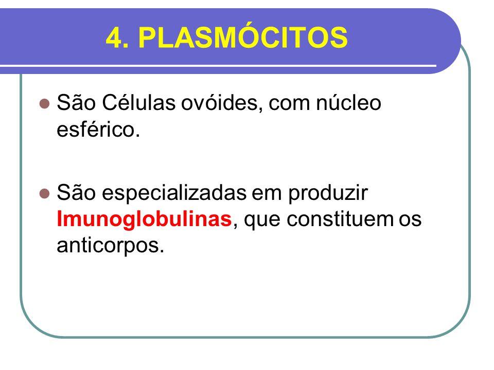 4. PLASMÓCITOS São Células ovóides, com núcleo esférico.