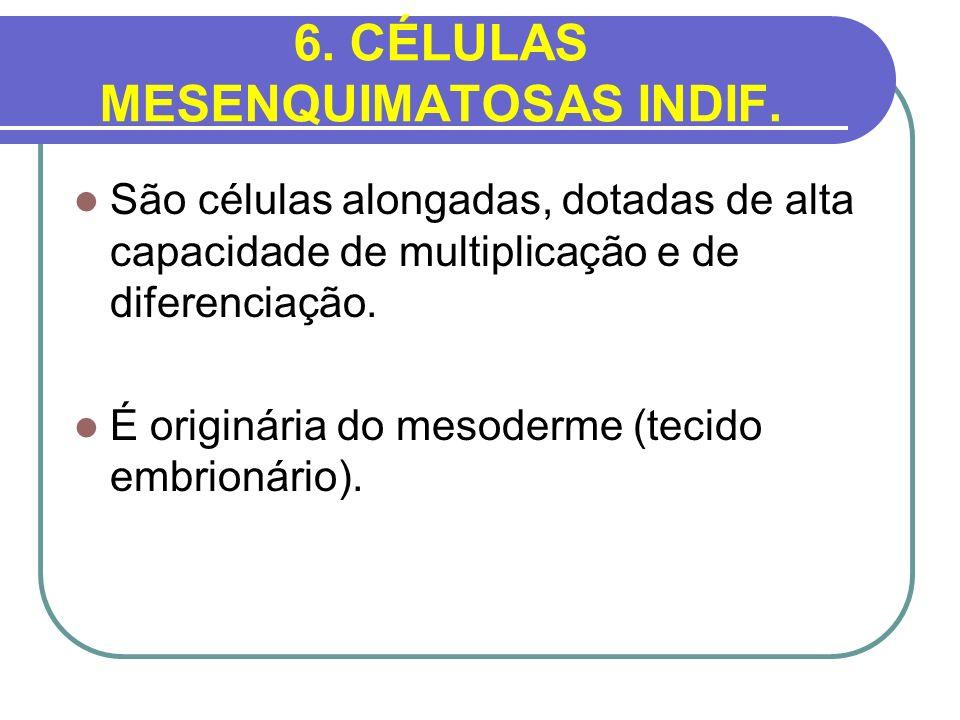 6. CÉLULAS MESENQUIMATOSAS INDIF.