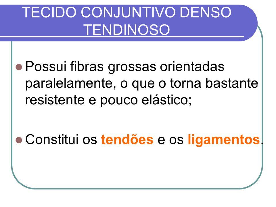 TECIDO CONJUNTIVO DENSO TENDINOSO