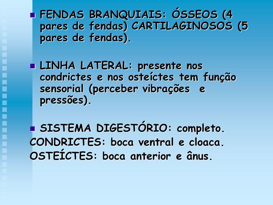 FENDAS BRANQUIAIS: ÓSSEOS (4 pares de fendas) CARTILAGINOSOS (5 pares de fendas).