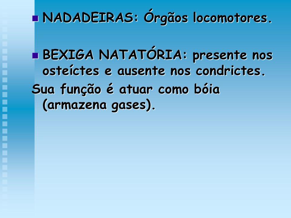NADADEIRAS: Órgãos locomotores.