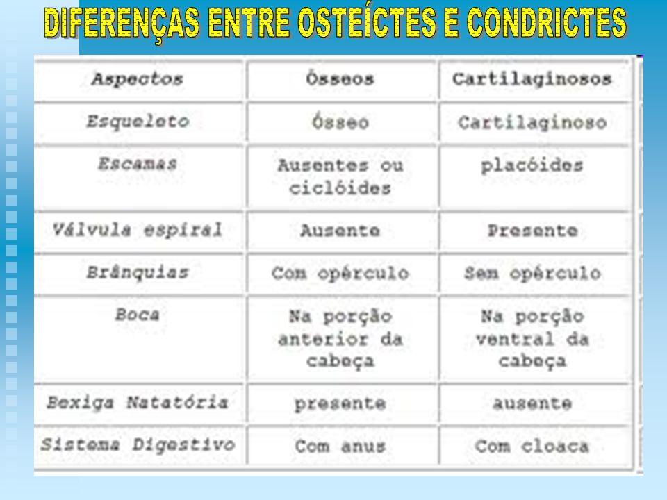 DIFERENÇAS ENTRE OSTEÍCTES E CONDRICTES