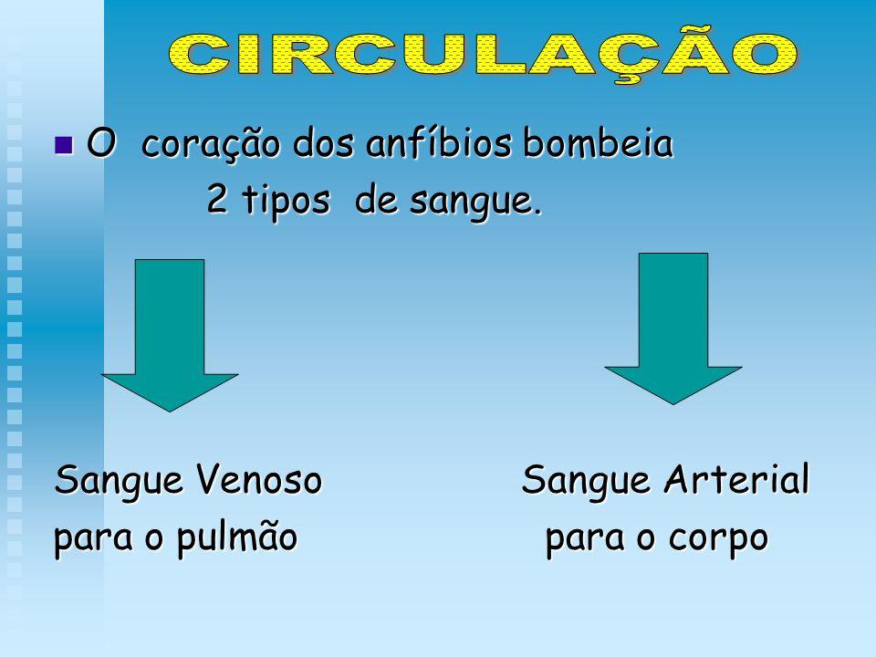 CIRCULAÇÃO O coração dos anfíbios bombeia 2 tipos de sangue.