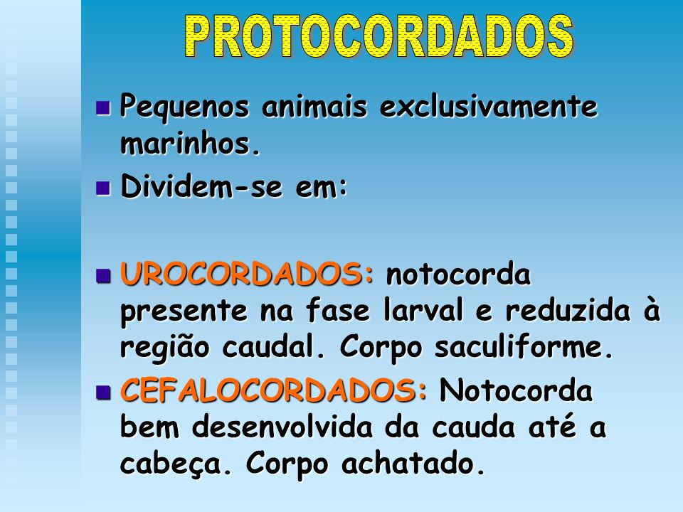 PROTOCORDADOS Pequenos animais exclusivamente marinhos. Dividem-se em: