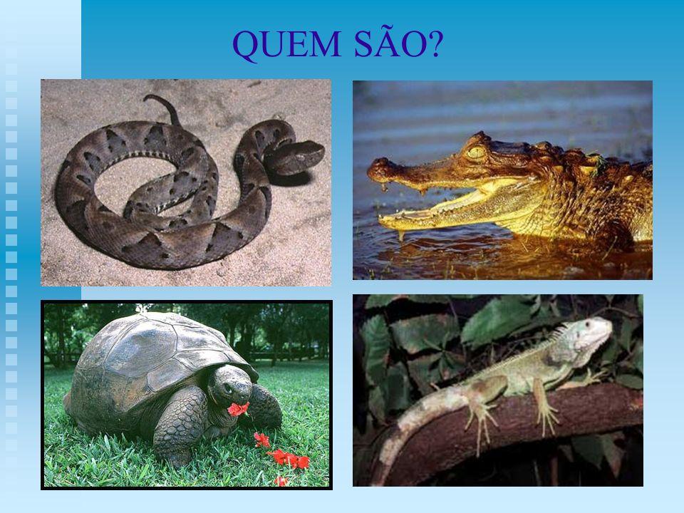 QUEM SÃO