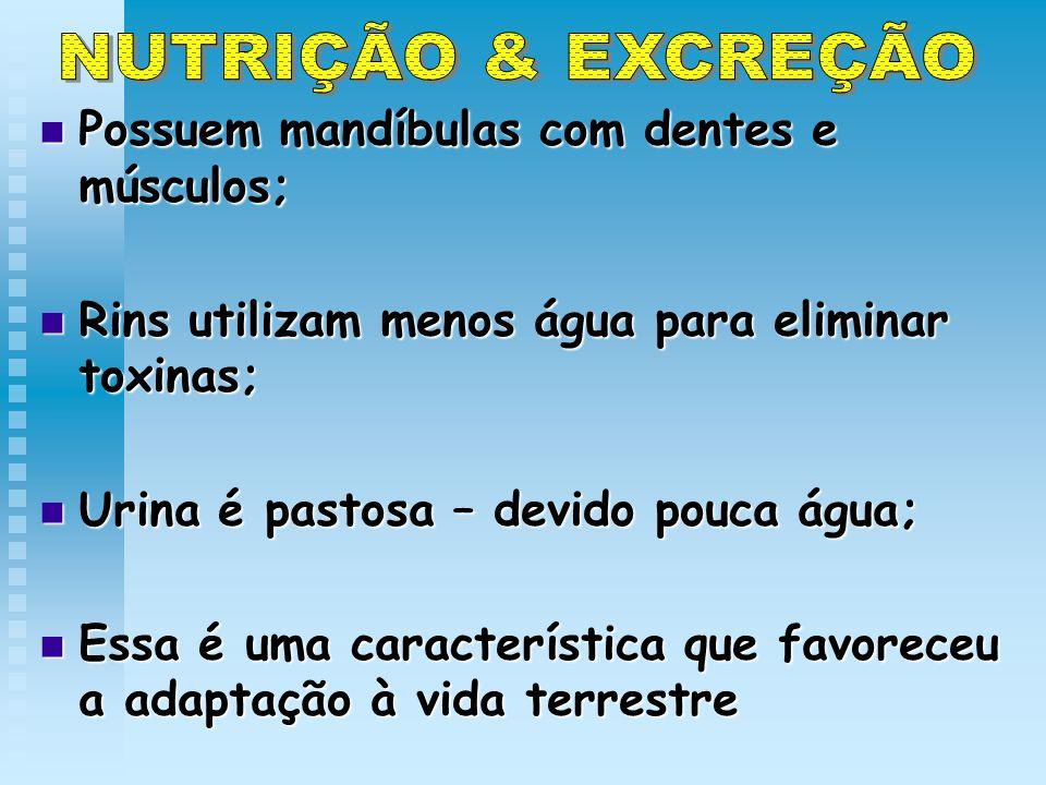 NUTRIÇÃO & EXCREÇÃO Possuem mandíbulas com dentes e músculos;
