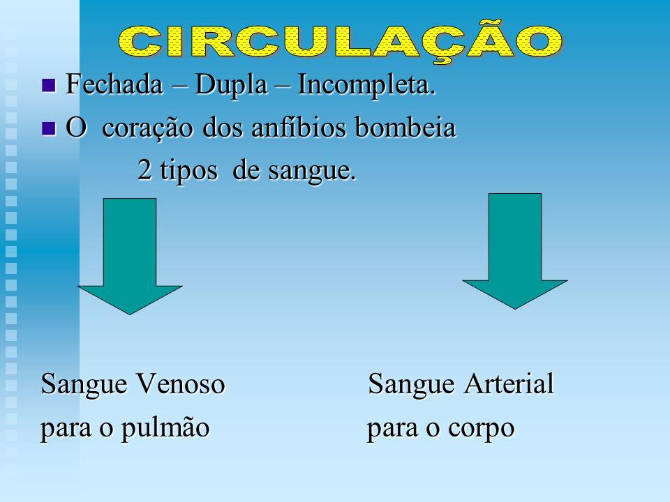 CIRCULAÇÃO Fechada – Dupla – Incompleta.