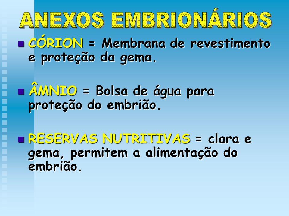 ANEXOS EMBRIONÁRIOS CÓRION = Membrana de revestimento e proteção da gema. ÂMNIO = Bolsa de água para proteção do embrião.