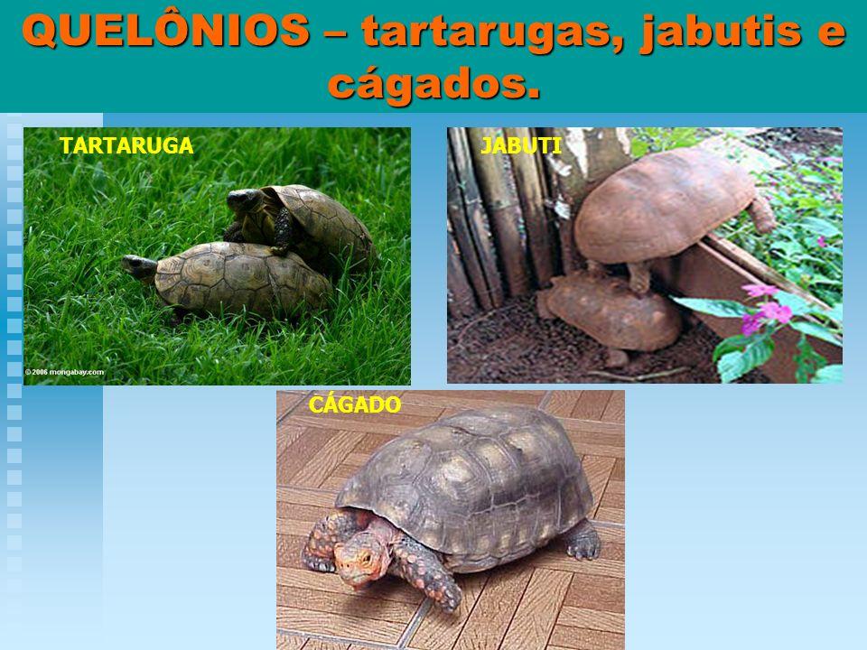 QUELÔNIOS – tartarugas, jabutis e cágados.