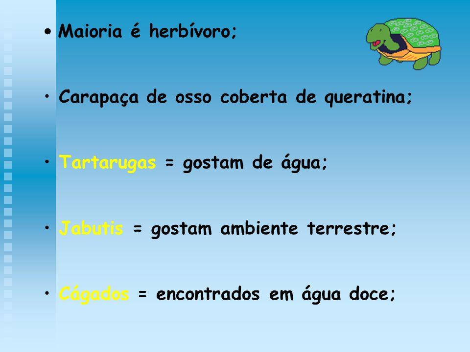Maioria é herbívoro; Carapaça de osso coberta de queratina; Tartarugas = gostam de água; Jabutis = gostam ambiente terrestre;