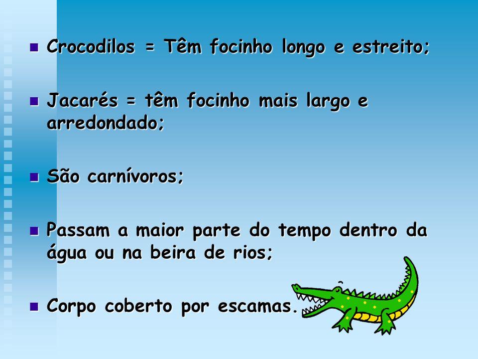 Crocodilos = Têm focinho longo e estreito;