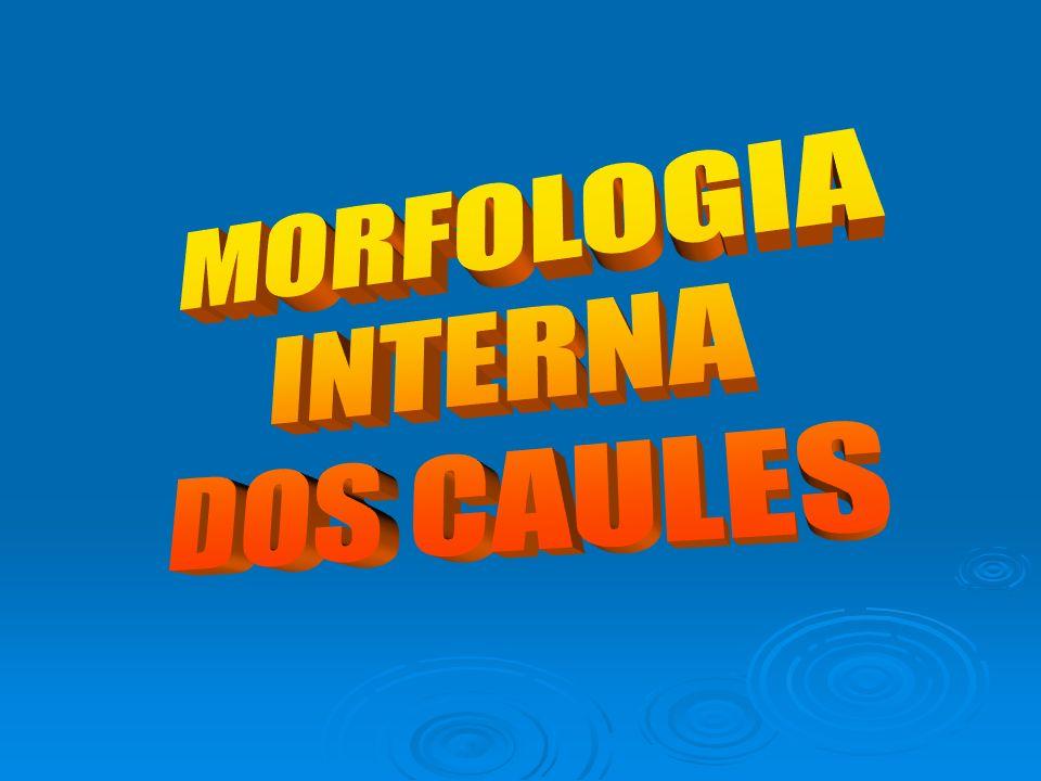 MORFOLOGIA INTERNA DOS CAULES
