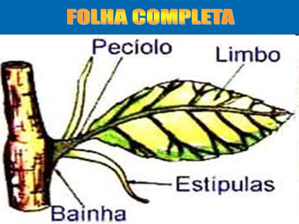 FOLHA COMPLETA