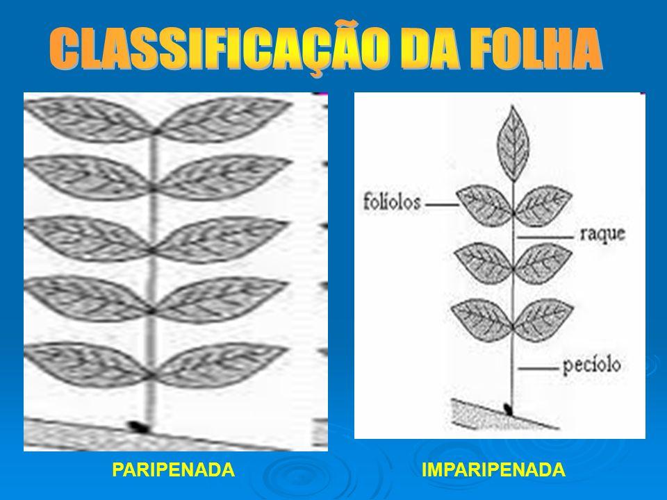 CLASSIFICAÇÃO DA FOLHA