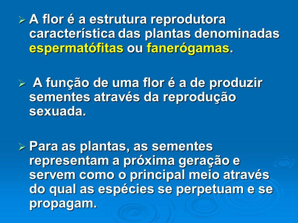 A flor é a estrutura reprodutora característica das plantas denominadas espermatófitas ou fanerógamas.