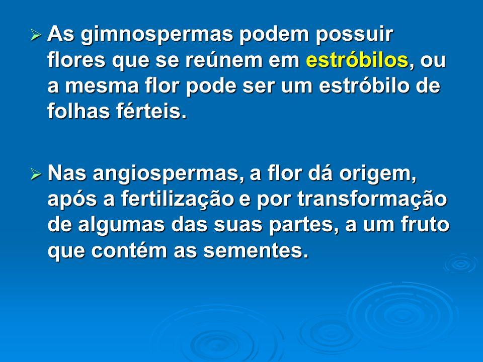 As gimnospermas podem possuir flores que se reúnem em estróbilos, ou a mesma flor pode ser um estróbilo de folhas férteis.