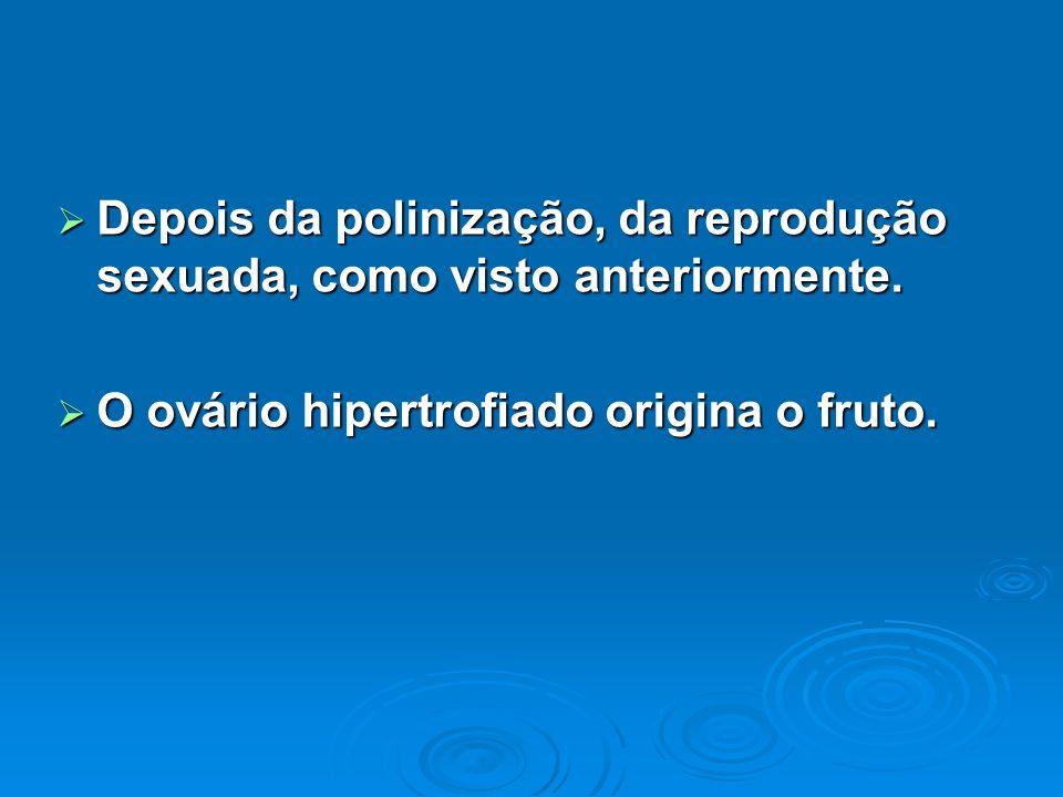 Depois da polinização, da reprodução sexuada, como visto anteriormente.