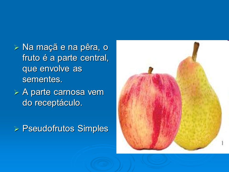 Na maçã e na pêra, o fruto é a parte central, que envolve as sementes.