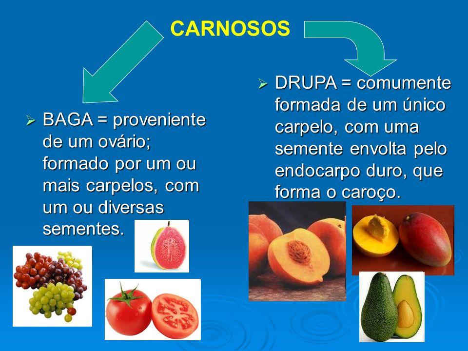 CARNOSOS DRUPA = comumente formada de um único carpelo, com uma semente envolta pelo endocarpo duro, que forma o caroço.