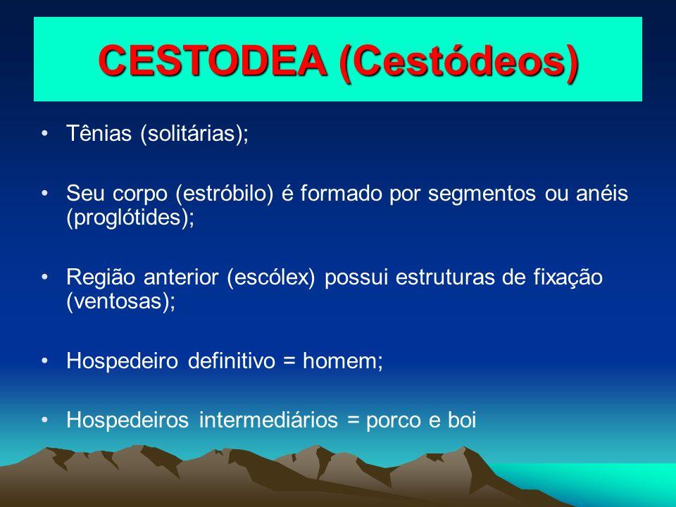 CESTODEA (Cestódeos) Tênias (solitárias);