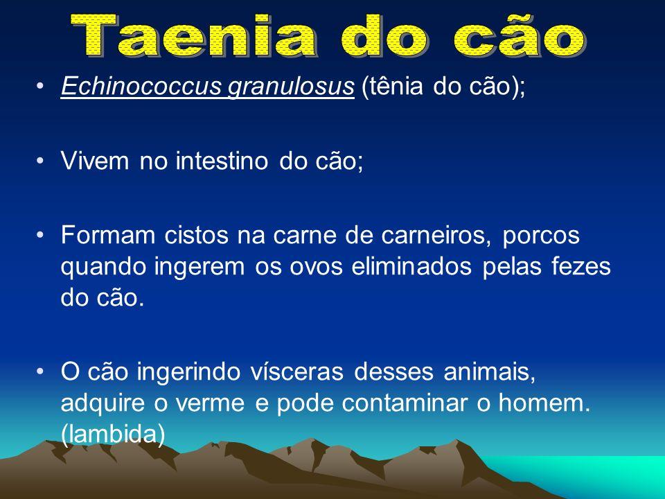 Taenia do cão Echinococcus granulosus (tênia do cão);