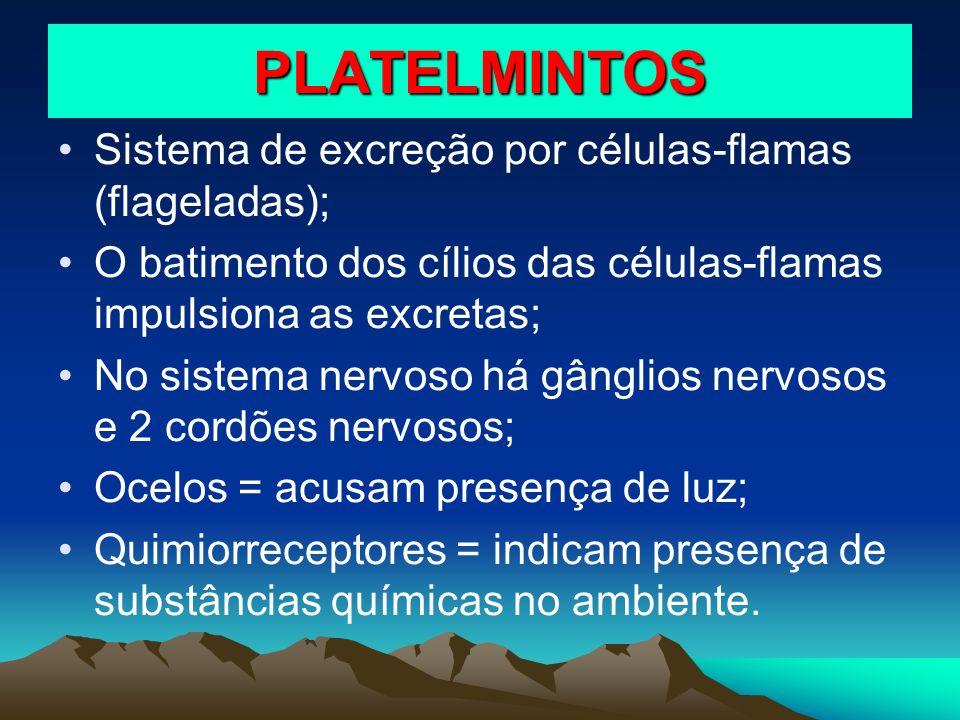 PLATELMINTOS Sistema de excreção por células-flamas (flageladas);