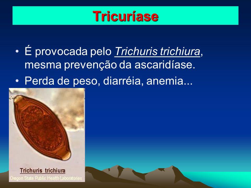 Tricuríase É provocada pelo Trichuris trichiura, mesma prevenção da ascaridíase.