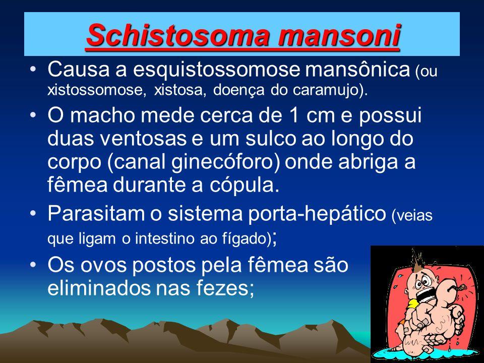 Schistosoma mansoni Causa a esquistossomose mansônica (ou xistossomose, xistosa, doença do caramujo).