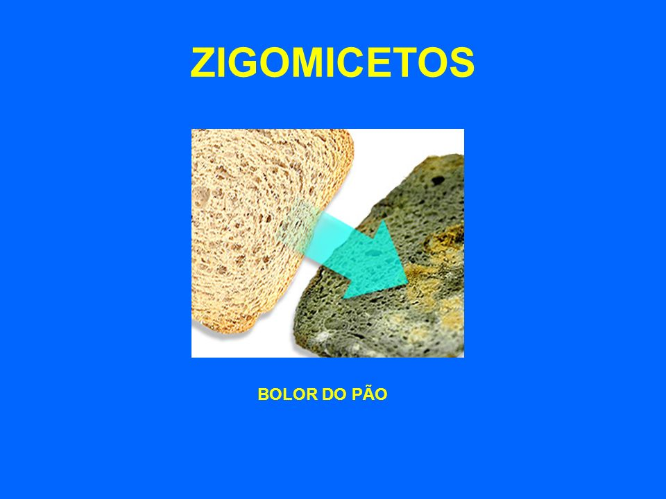 ZIGOMICETOS BOLOR DO PÃO