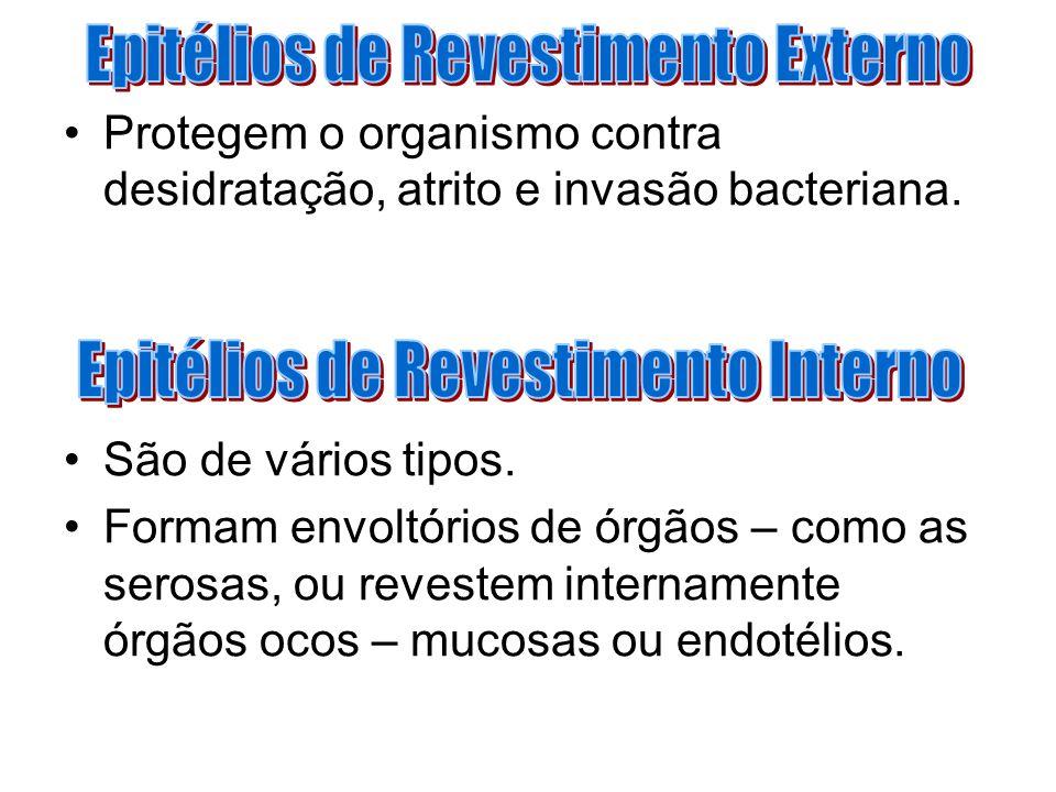 Epitélios de Revestimento Externo