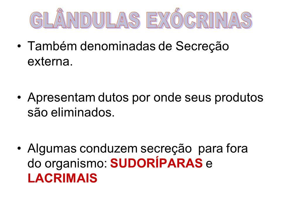 GLÂNDULAS EXÓCRINAS Também denominadas de Secreção externa.