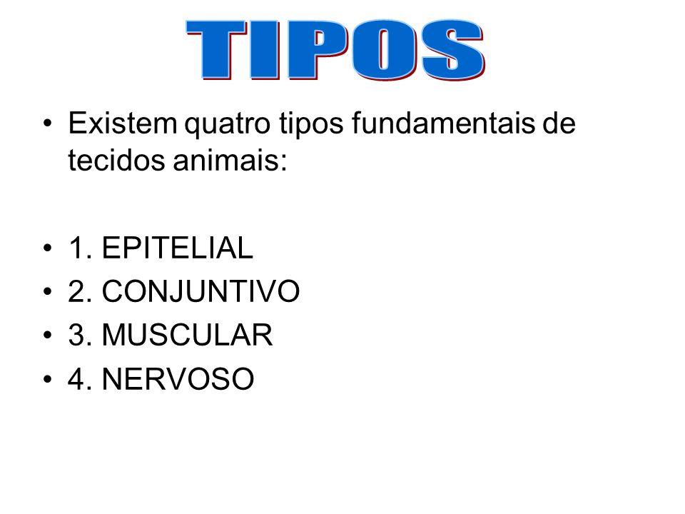 TIPOS Existem quatro tipos fundamentais de tecidos animais: